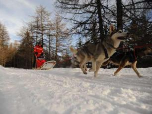 Courmayeur Dog Sledding
